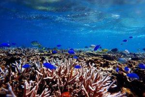熱帯魚シュノーケル
